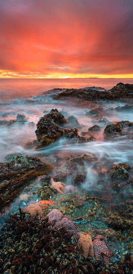 Matthew Kuhns - Starfish Dreams - 2014 Epson Pano Silver Award Winner