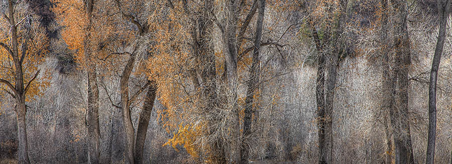 Avi Cohen - Cottonwood Trees in Fall - 2014 Epson Pano Silver Award Winner